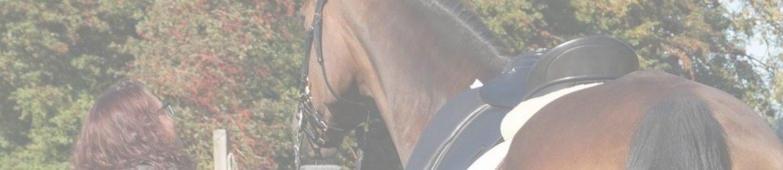 THS Horses
